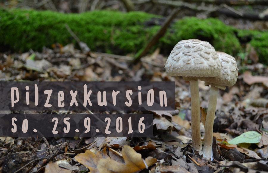 Pilzexkursion am 25.9.2016